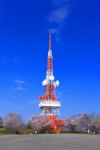 神奈川県 湘南平の桜の写真素材 [FYI03007123]