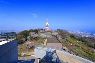 神奈川県 湘南平の桜の写真素材 [FYI03007124]