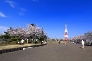 神奈川県 湘南平の桜の写真素材 [FYI03007127]