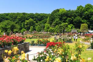 生田緑地 ばら苑の写真素材 [FYI03007138]
