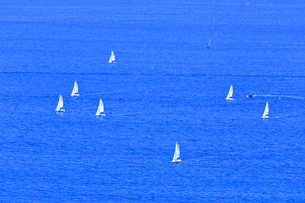 夏の相模湾のヨットの写真素材 [FYI03007257]