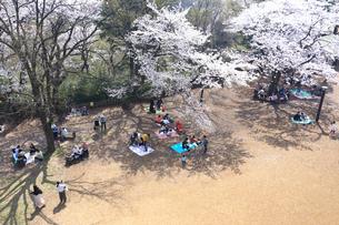 神奈川県 生田緑地の桜の写真素材 [FYI03007326]