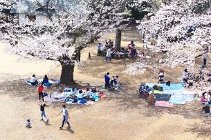 神奈川県 生田緑地の桜の写真素材 [FYI03007333]