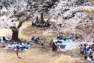 生田緑地の桜の写真素材 [FYI03007337]