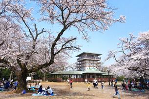 生田緑地の桜の写真素材 [FYI03007349]
