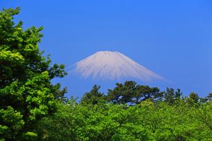 新緑と富士山の写真素材 [FYI03007359]