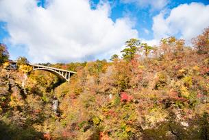 秋の鳴子峡の写真素材 [FYI03007764]