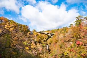 秋の鳴子峡の写真素材 [FYI03007765]
