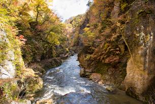 秋の鳴子峡の写真素材 [FYI03007771]