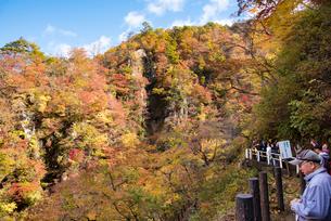 秋の鳴子峡の写真素材 [FYI03007773]