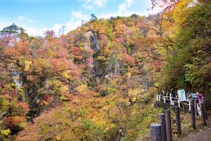 秋の鳴子峡の写真素材 [FYI03007777]