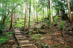 赤沢自然休養林の写真素材 [FYI03008039]