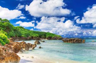 浜シタン群落の写真素材 [FYI03008071]