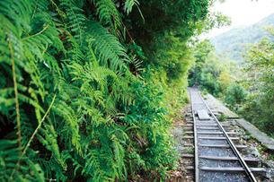 縄文杉へのトロッコ道の写真素材 [FYI03008257]