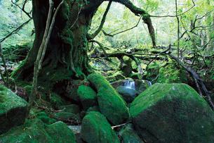 白谷雲水峡の写真素材 [FYI03008279]