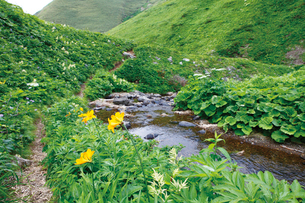 礼文林道のハイジの谷の写真素材 [FYI03008571]