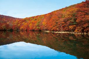 沼に映る蔦沼の紅葉の写真素材 [FYI03008818]
