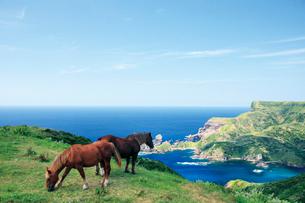国賀海岸 赤尾展望所からの眺望と馬の写真素材 [FYI03009191]