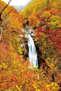 紅葉の秋保大滝の写真素材 [FYI03009314]