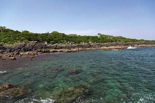 新緑の鐙瀬溶岩海岸の写真素材 [FYI03009612]