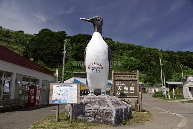 天売島の風景の写真素材 [FYI03009731]