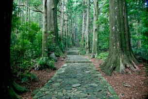 熊野古道の大門坂の写真素材 [FYI03010329]