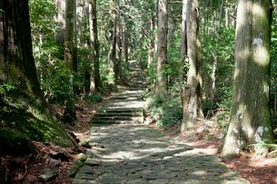 熊野古道の大門坂の写真素材 [FYI03010330]