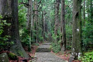 熊野古道の大門坂の写真素材 [FYI03010331]