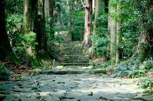 熊野古道の大門坂の写真素材 [FYI03010346]