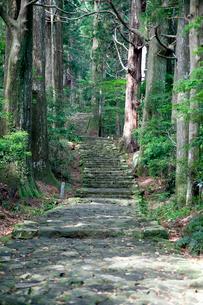 熊野古道の大門坂の写真素材 [FYI03010363]