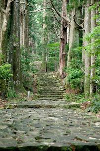 熊野古道の大門坂の写真素材 [FYI03010365]
