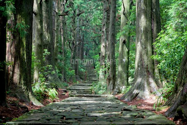 熊野古道の大門坂の写真素材 [FYI03010368]