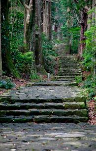 熊野古道の大門坂の写真素材 [FYI03010375]