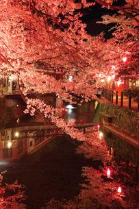 桜咲く夜の城崎温泉,大谿川の写真素材 [FYI03010599]