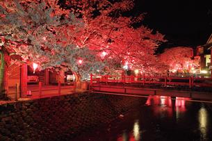 桜咲く夜の城崎温泉,大谿川の写真素材 [FYI03010600]