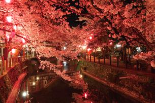 桜咲く夜の城崎温泉,大谿川の写真素材 [FYI03010601]