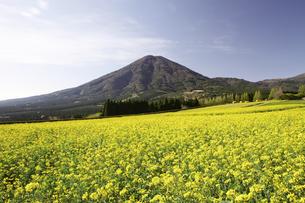 菜の花咲く生駒高原の写真素材 [FYI03010971]