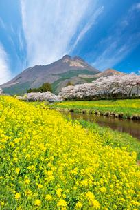 春の由布岳の写真素材 [FYI03011060]