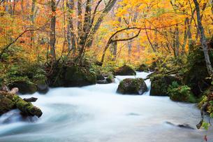 奥入瀬渓流,阿修羅の流れの写真素材 [FYI03011127]