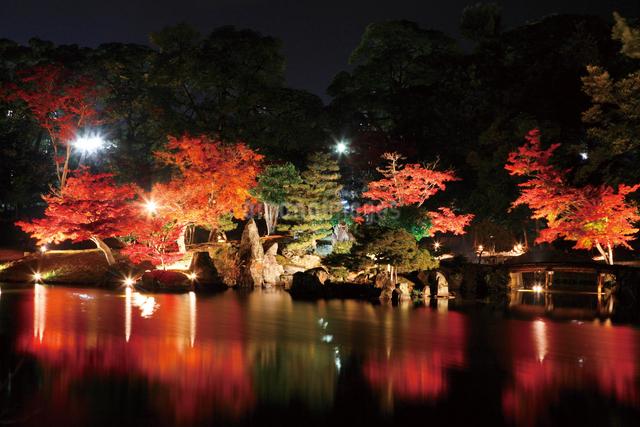 錦秋の玄宮園ライトアップの写真素材 [FYI03011374]