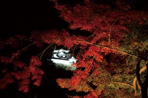 錦秋の玄宮園ライトアップの写真素材 [FYI03011414]