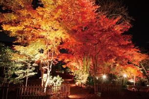 錦秋の玄宮園ライトアップの写真素材 [FYI03011425]