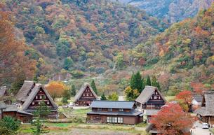 五箇山の合掌造り集落の紅葉の写真素材 [FYI03011544]
