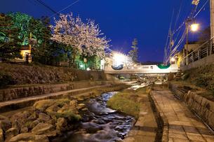 桜咲く夜の玉造温泉街の写真素材 [FYI03011589]