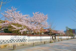 桜咲く春の津和野殿町通りの写真素材 [FYI03011603]