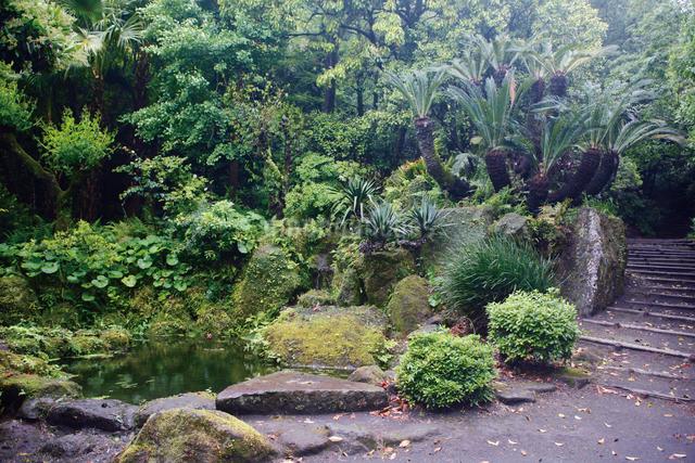 初夏の緑深い仙巌園の写真素材 [FYI03011812]