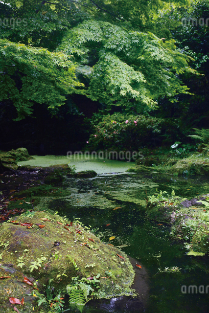 初夏の緑深い仙巌園の写真素材 [FYI03011813]