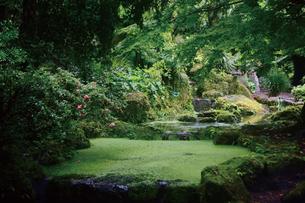 初夏の緑深い仙巌園の写真素材 [FYI03011814]