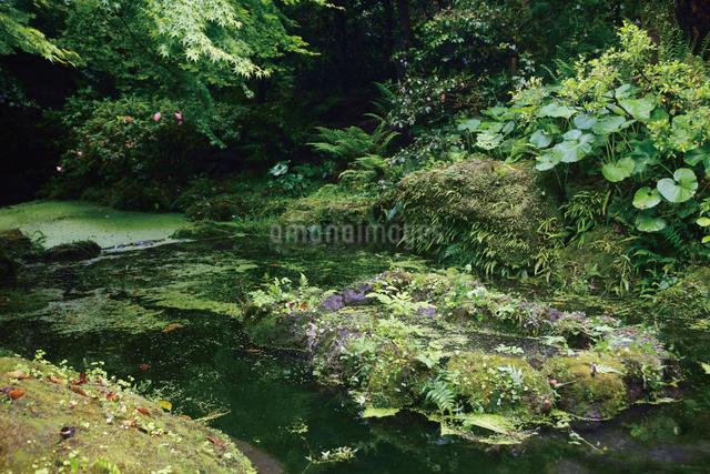 初夏の緑深い仙巌園の写真素材 [FYI03011815]