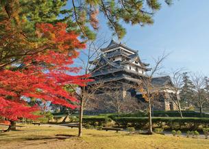 松江城の紅葉の写真素材 [FYI03011889]